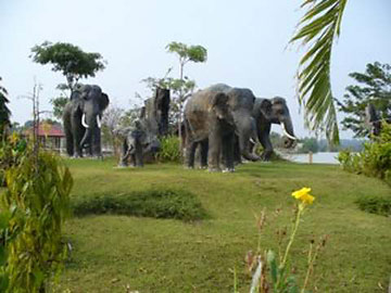 Besuch des grössten Elefantendorfs, ausserhalb von SURIN