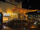 Dinosaurier Museum