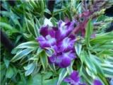 Nong Noch Garden